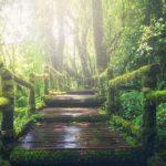 aluhti inspiratieplatform bos en strand voor jouw ontspanning, ionen en phytonciden