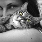 aluhti inspiratieplatform katten aaien maakt je ontspannen