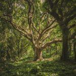 aluhti inspiratie magazine, tips voor de zomer: bos met schaduw
