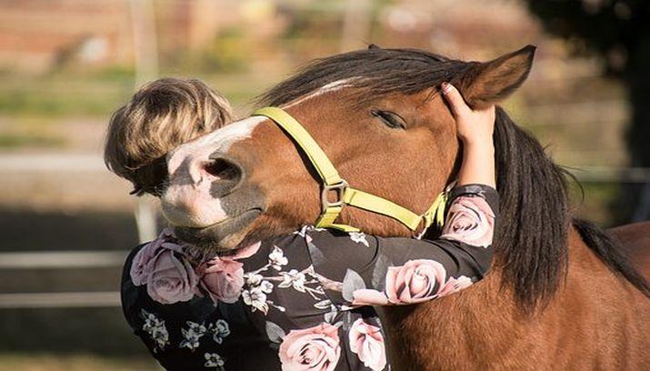 eenzaamheid, eenzaam, oplossing, contact, connectie, paard knuffel vrouw aluhti